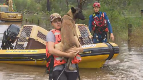 Dogs being rescued near Londonderry, North West Sydney.