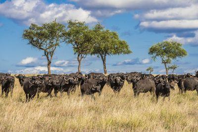 <strong>Tanzania</strong>