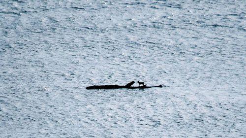 Castaway dog survives on floating log