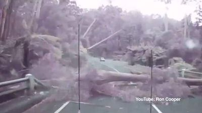 "<p>Drivers on a Victorian bush highway came within inches of being crushed by a dozen trees that were recorded falling one after the other across forest road in a brutal wind storm. </p><p> A dashcam captured the near-miss during a storm that lashed the area around Maroondah Highway near Healesville, about 65km northeast of Melbourne. </p><p> Leaves and bark blow across the strip of road known as the Black Spur, a twisting tree-lined road near the Baw Baw National Park. </p><p> When the 4WD with the camera mount rounds a corner and approaches the Watts River Bridge a large, black shadow moves out of the upper left of the screen. </p><p> It is soon clear a 30m gumtree is tumbling over with a great height that stretches across the road. </p><p> The driver made the spit-second decision to hit the brakes rather than speed up and try and beat the collapse — a choice that almost certainly saved his life. </p><p> A car coming in the opposite direction made the same judgement and stopped in time to watch as a dozen tall timbres fell across the road like their roots were blasted away in a controlled demolition. </p><p> As soon as the first tree fell, it was followed by several trees that fell in series, covering about 100m of open road between the two vehicles. </p><p> ""These trees started falling like a deck of cards,"" the 4WD driver, who declined to be named, told the <i>Herald Sun</i>.</p><p> ""One more second — in fact even part of a second — would have put me either under the tree or into the tree. </p><p> ""I'm always aware of what's around me and I think it paid off that day."" </p><p> The tree-tumble occurred on December 29 around 2.15pm during a wind storm with gusts up to 80km/h. </p><p> It took around 2.5 hours to clear the debris. </p><p> </p>"