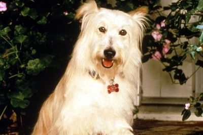 Do you remember the name of the Camdens' pooch on <I>7th Heaven</I>?