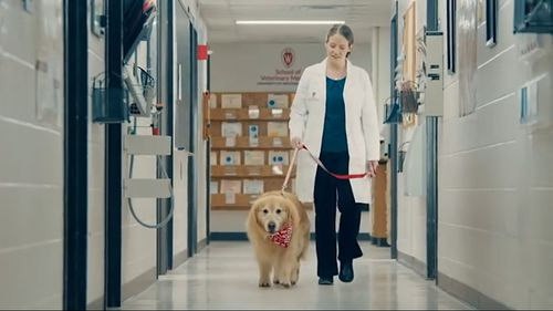 The ad shows the beloved dog playing on the beach before walking down the halls of the veterinary clinic.
