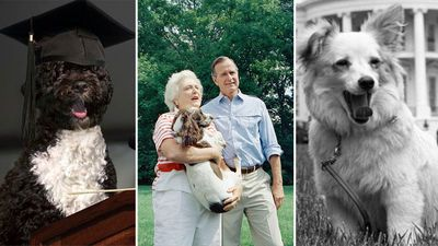 First Dogs of the White House