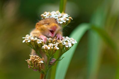 "<strong>Winner of The Alex Walker's Serian On The Land Category: ""The Laughing Dormouse"" By Andrea Zampatti</strong>"