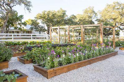 The garden beds