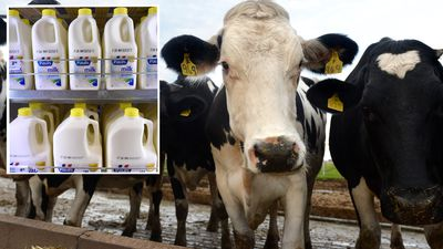 Supermarket giants' milk levy to help farmers