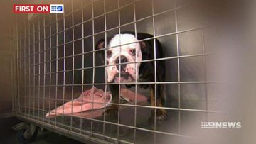 VIDEO: Finance company takes the pain out of vet bills