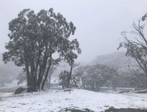 Mount Baw Baw, in Victoria's west, got a dumping of snow last night. (9NEWS)