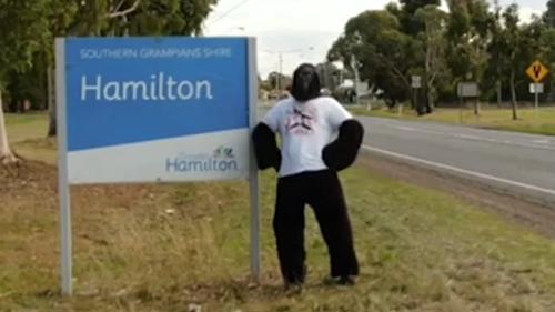 Hammo the gorilla lifting spirits in regional Victoria during lockdown 4.0