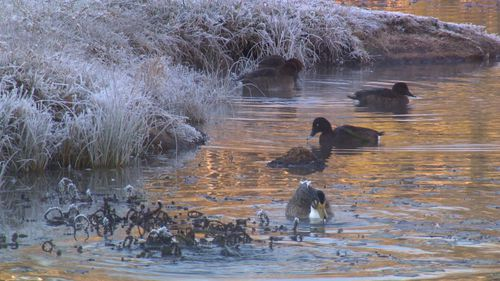 Even Sydney couldn't escape the frigid morning, with western suburbs also dropping below zero. Image: 9News
