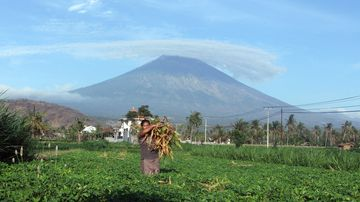 A woman works at a field with Mount Agung seen in the background in Amed, Bali, Indonesia. (AP)