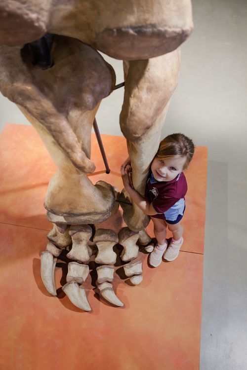 Child from Eromanga State School sizing up against a replica of Cooper's rear leg at the Eromanga Natural History Museum