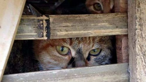 Truck filled with hundreds of living cats seized en route to Vietnamese restaurants
