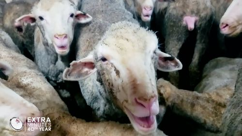 The RSPCA has also slammed the industry, calling on the Federal government for an immediate suspension to the Australian live export trade. (60 Minutes).