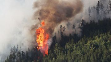 The Kenora 51 forest fire which NSW Fire and Rescue Superintendent Gregory Wright is helping with in Ontario.