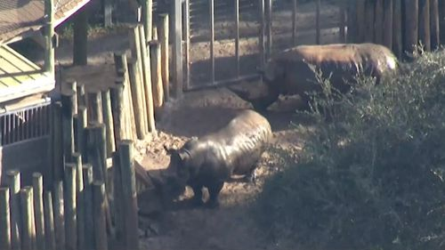 A toddler has squeezed through the posts of a rhino enclosure, and been injured during a visit to a Florida zoo.