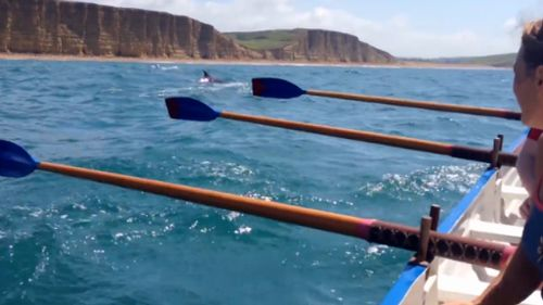 The pod of dolphins were caught on camera by a member of the rowing team. (9NEWS)