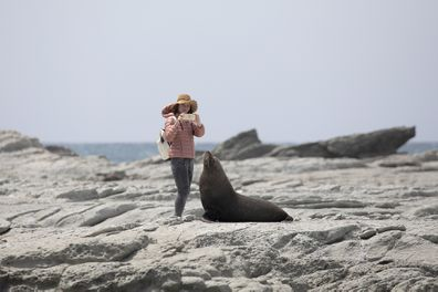 Tourist takes photo of seal in New Zealand