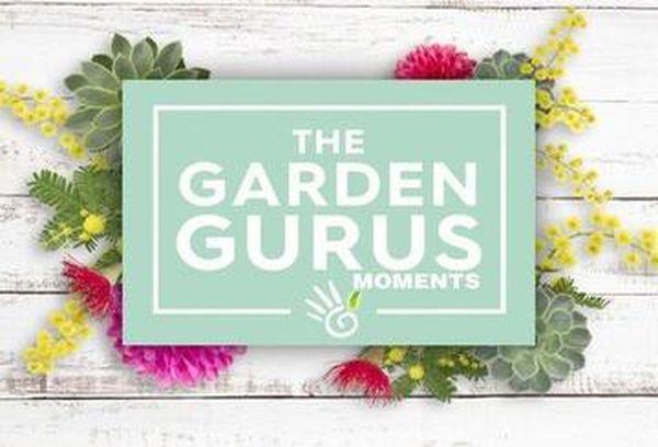 The Garden Gurus Moments
