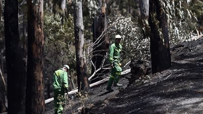 The firefighters who battled the Christmas Day blaze along Victoria's Great Ocean Road have been credited with preventing even further catastrophic losses. (AAP)