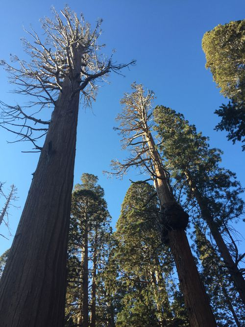 The Sierra Nevada in northern California is famous for the majestic sequoias.