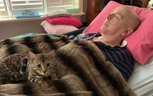 Terminally ill Melbourne man's 'best mate' stolen as cat thefts climb during lockdown