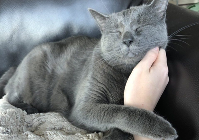 Cat sitting nine-year-old Shady in Austin, Texas.