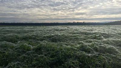 "<p>An Australian dairy farmer awoke on Tuesday morning to spooky scenes across his property, as a sea of wispy, white spider webs covered his green paddocks.</p><p>  The phenomenon, known as ""ballooning"", typically occurs during late autumn or early winter, when spiders seek higher ground to escape cooler temperatures.</p><p>  Click through the gallery to see images from the farm in Portland, Victoria, plus other ballooning events in Australia. <i>Source: Facebook/Alex Bunchman</i></p>"