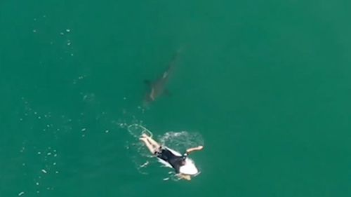Pro surfer Matt Willkinson was paddling near Ballina when a shark swam straight at him.
