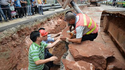 The fossils were discovered earlier this month during road works in Heyuan in Guangdong province,