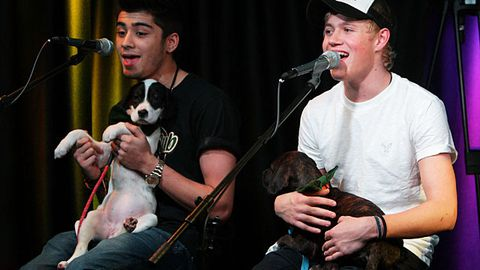 One Direction perform gig with puppies on their laps