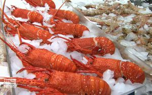 Millions of dollars worth of crayfish in limbo as China targets another Aussie industry
