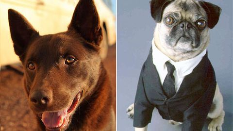 Doggy style: Cutest movie dogs of all time