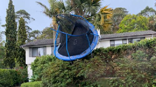 A trampoline has been thrown into the hedges in Frenchs Forest.
