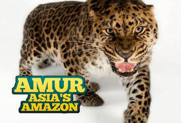 Amur: Asia's Amazon
