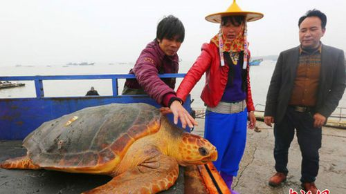 Chinese fisherman turns down equivalent of a month's wage to instead let rare sea turtle live