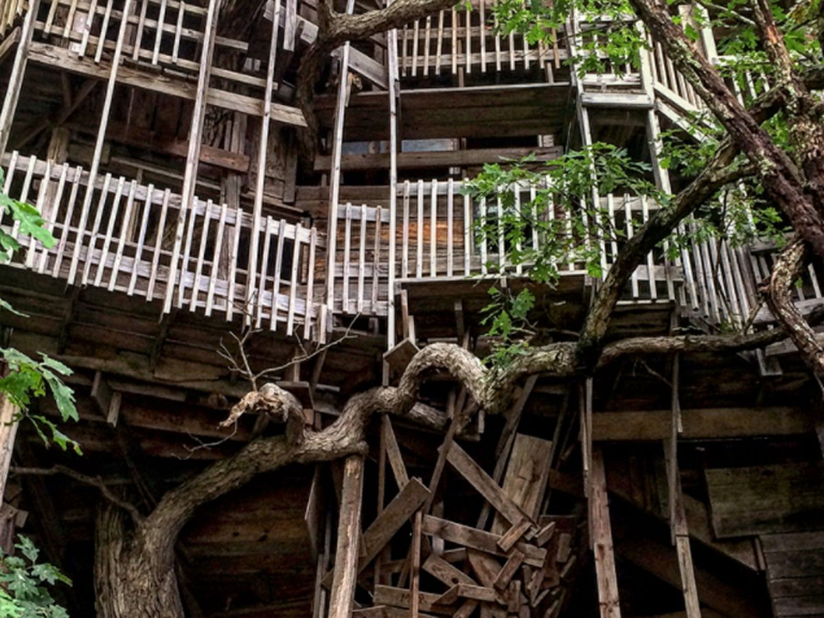 Picture of: Inside The World S Largest Tree House 9travel