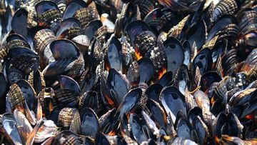 190702 USA heatwave California mussels dying intense temperatures weather news World