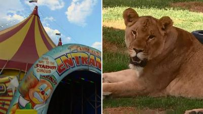 Could this be the death of the circus?