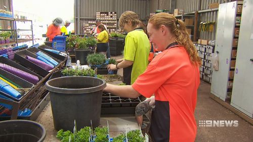 The nursery, which has 90 of its 110 workers living with disabilities, will now provide plants for state government infrastructure projects. Picture: 9NEWS.