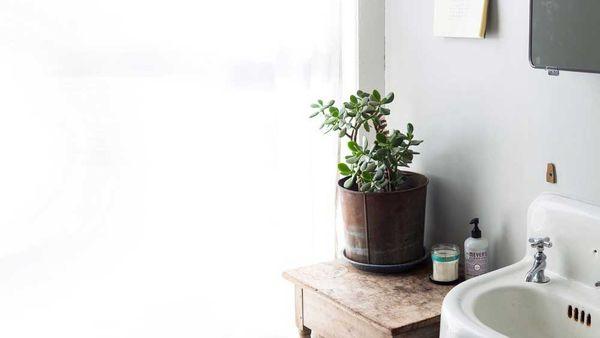 Pictured: Jade plant. Image credit: portfolio.alicegao.com