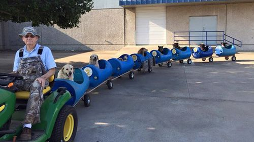 The rescued stray dogs ride around the neighbourhood. (Facebook)