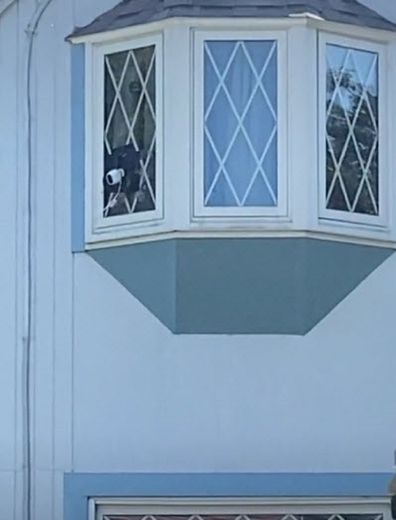 Neighbours feud woman's home