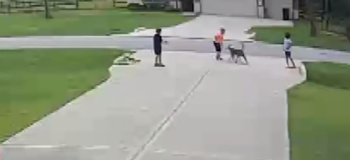 Grant Brown looked up to see a dog attacking Mason Lindeman, who was playing outside his Conroe, Texas, home.