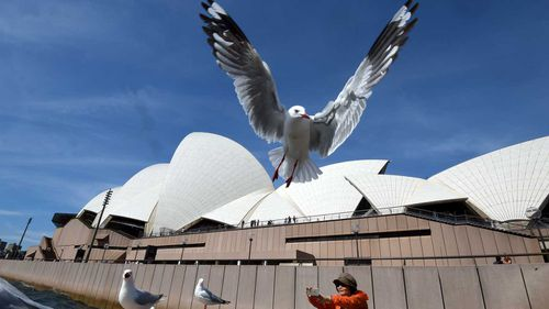 Seagulls are prolific across the country, perhaps most notoriously in Sydney's Circular Quay, where they are known to snatch food from tourists' hands.