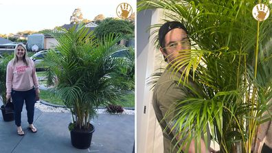 Aussie dad blogger shares the hilarious story behind his wife's latest indoor plant buys.