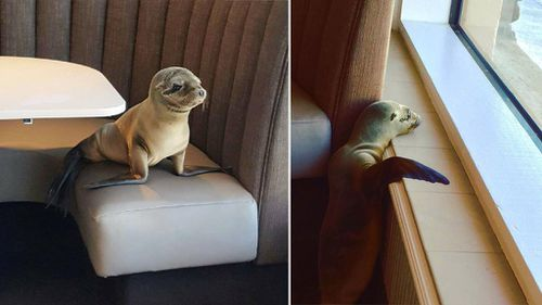 The sea lion pups is one of thousands of pup found washed ashore in recent years. (Facebook/Bernard Guillas)