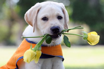 White said he's always reminded how extraordinarily intelligent and loyal guide dogs are.<br>
