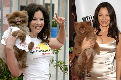 Fran Drescher's dog Chester: We're all agreed that's an Ewok, right?