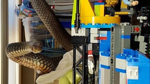 A large eastern brown snake was found coiled around a child's toy set in Queensland. (Gold Coast and Brisbane Snake Catcher)
